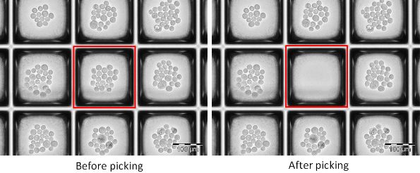 Before and after cell recovery from nanowell plate