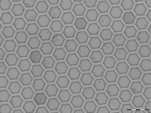 H100 hexagonales Nanowell Array