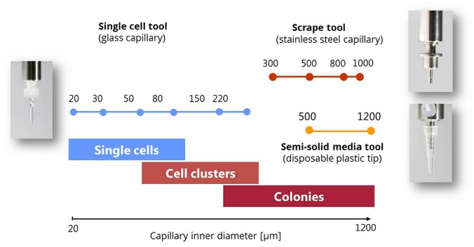 overview of available capillaries for cell isolation